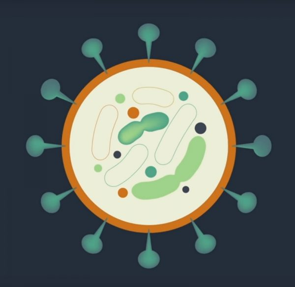 Coronavirus Cell (COVID-19)